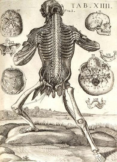 Cortona Tabulae Anatomicae 1741