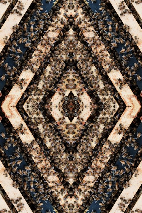 1. TehyaMacKenzie - Apoidea #1 - 30in x 40in